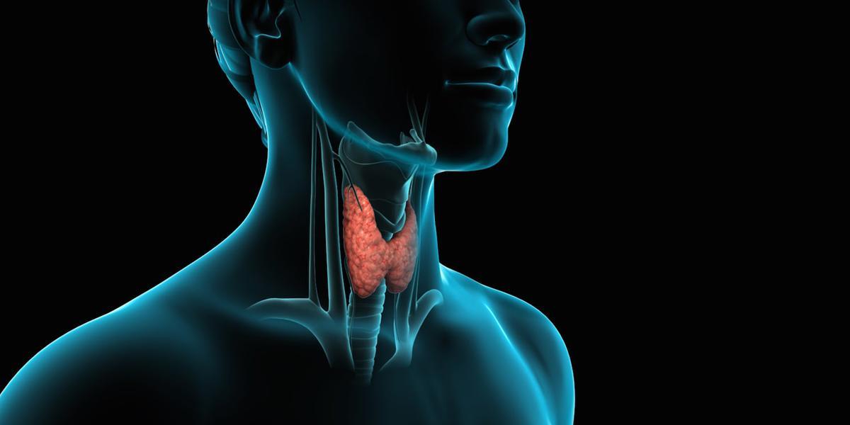 Оценка функции щитовидной железы